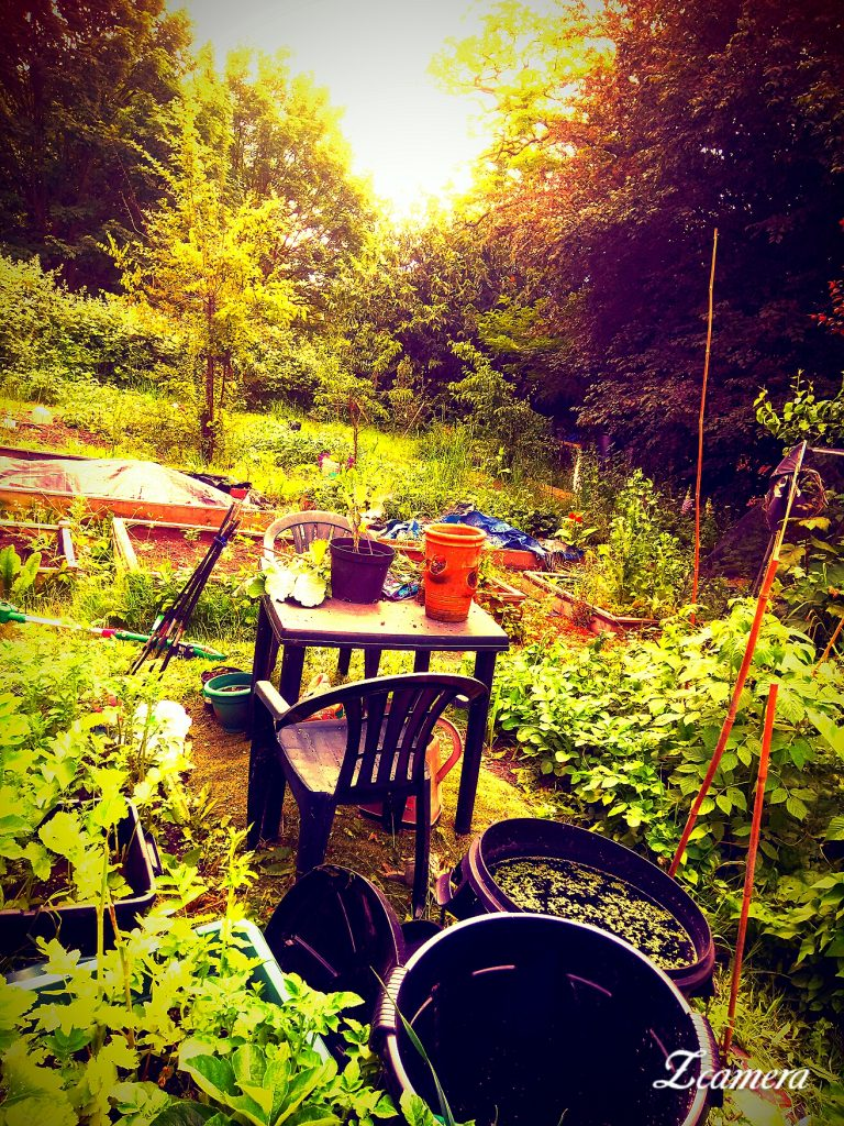 Allotment in York with garden seating etc